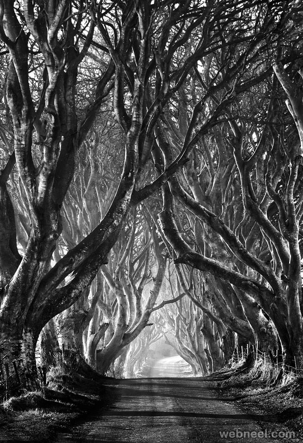50 Best Black And White Photography To Get Inspire - The